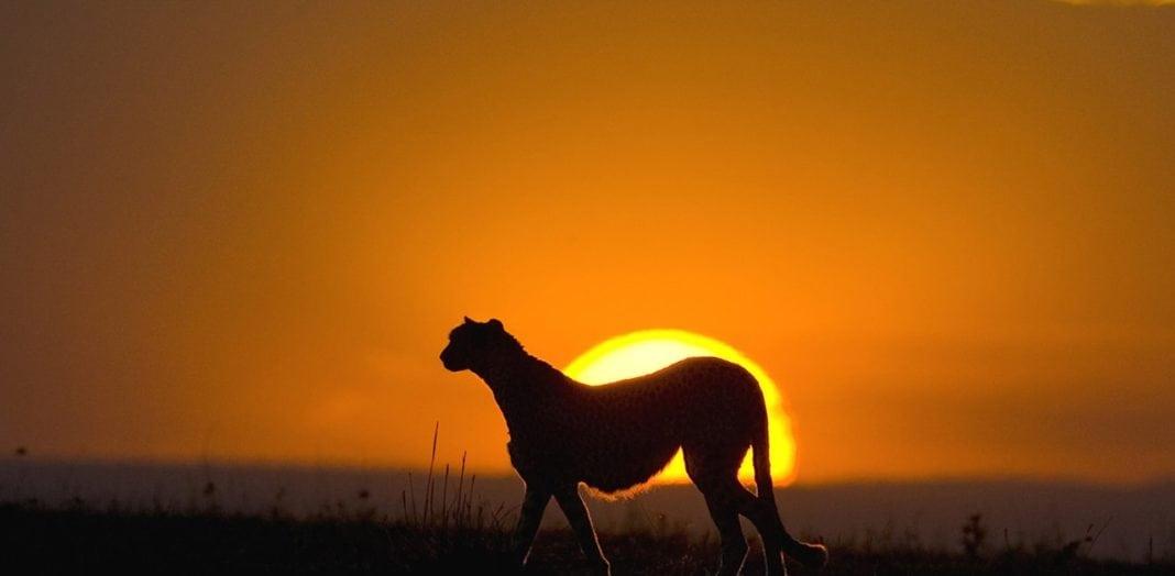 पूर्वी अफ्रीका-पर्यटन