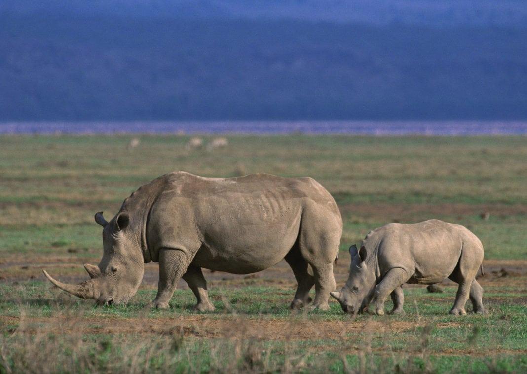 Ngorongoro-Konservado