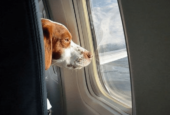 pet-friendly-airline