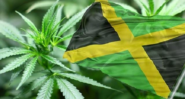 Jamaïque-ganja