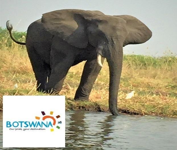 Safari.Botswana.1-1