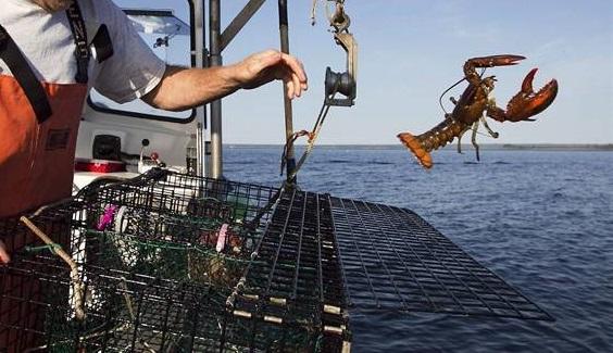 lobster-fishing