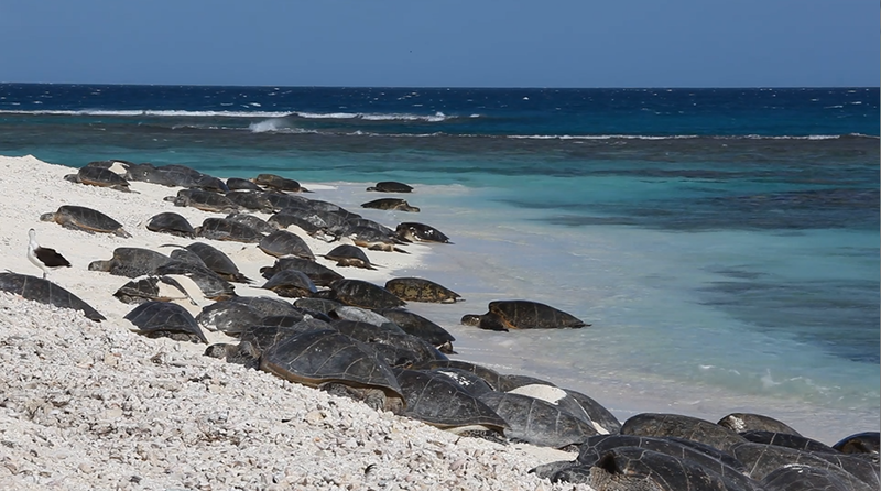 sea-turtles-basking_custom-f82e973122c2afd9a5106d728b4a40585f1e78fc-s800-c85