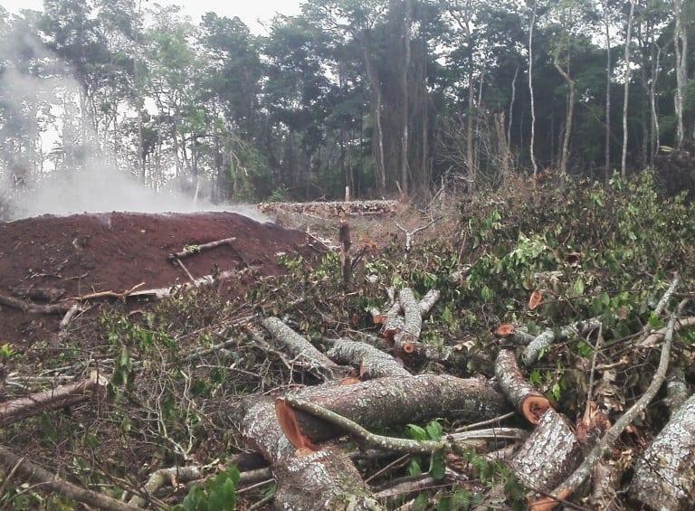Ugandan judge okays destruction of natural forest for sugarcane plantation