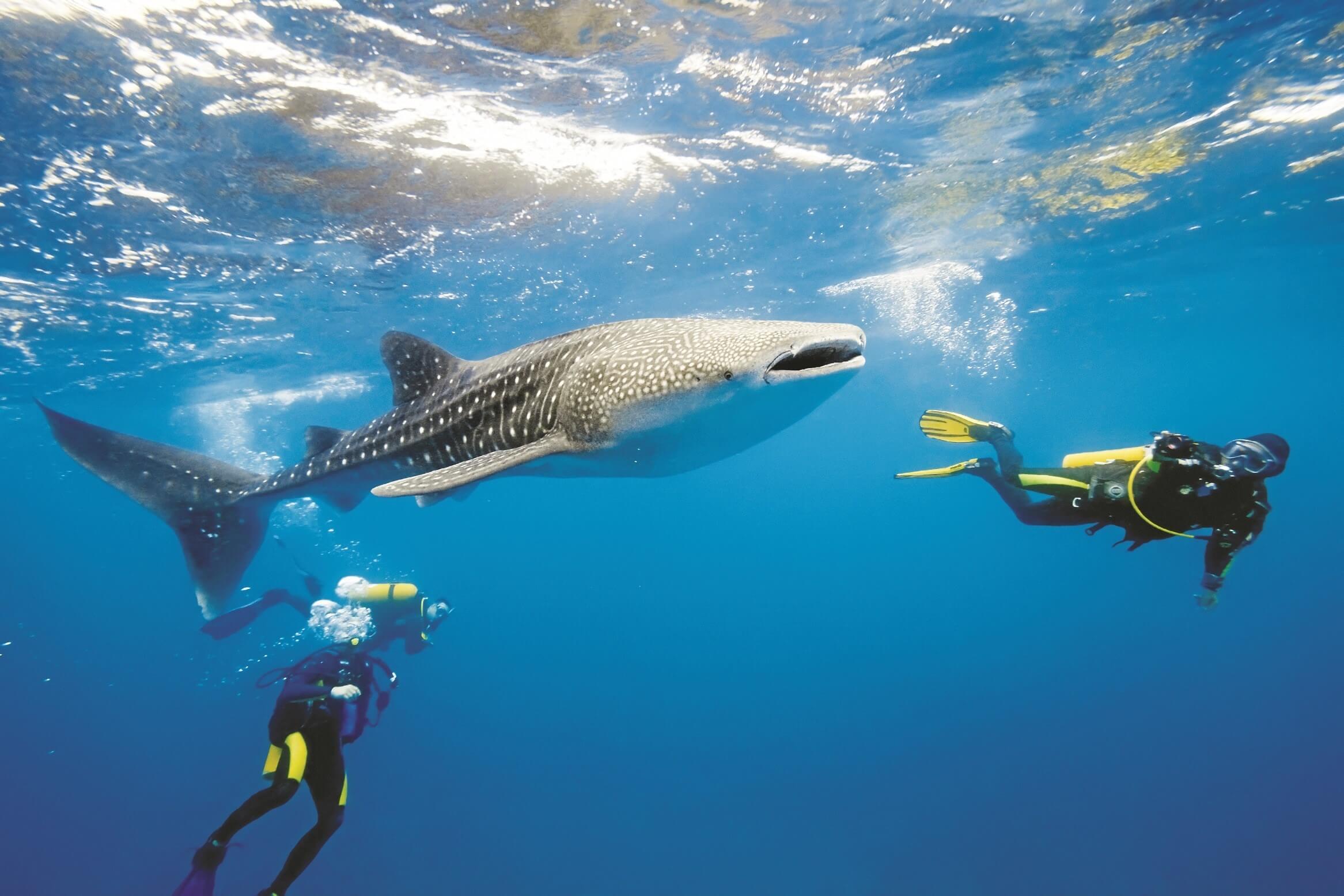eksoottisia vesiurheilulajeja ja aktiviteetteja on tarjolla malediiveilla