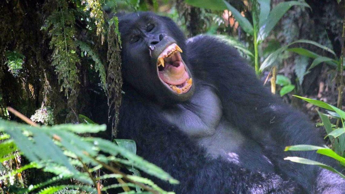 Safari στην Ουγκάντα; Ο μόνος ταξιδιωτικός πράκτορας 20/20 είναι: Let's Go Travel