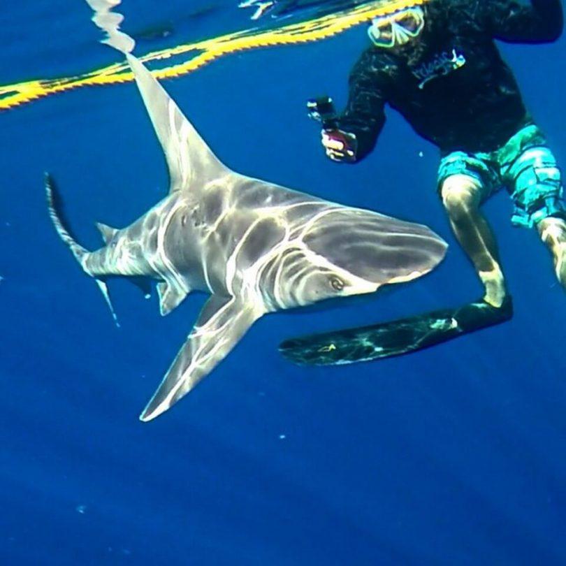 Izletnička grupa na Havajima: 3 morska pasa ugrizla dok su ronila