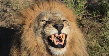 Zambijske zajednice zaustavile su lov na trofeje u sporu oko turističkih naknada