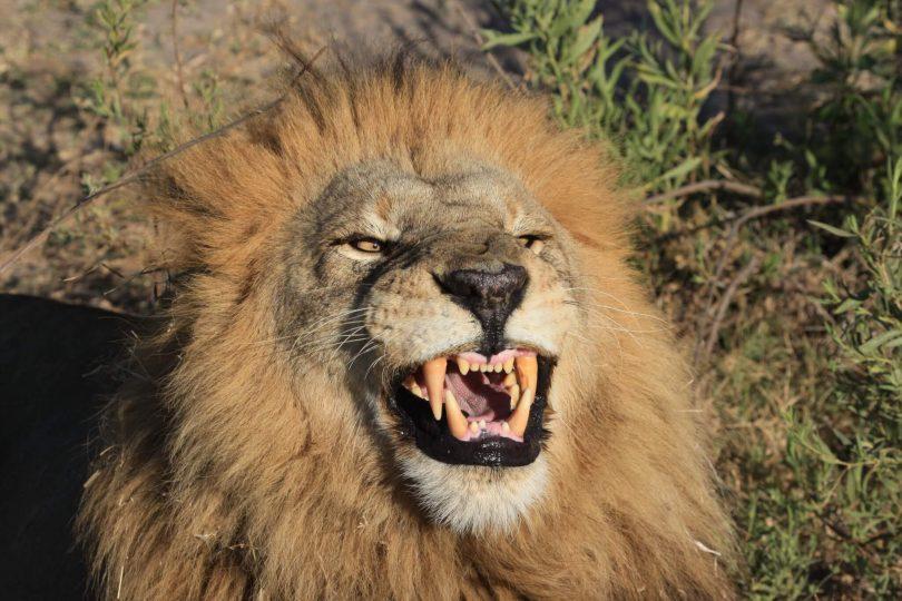 Społeczności zambijskie wstrzymują polowanie na trofea w sporze o opłaty turystyczne
