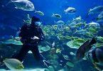 السلطات المصرية تمنع السياح من إطعام الأسماك أثناء جولات الغوص