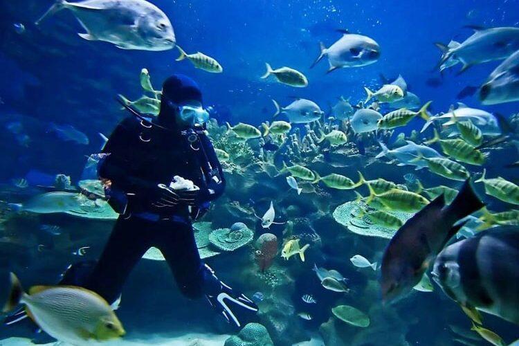 Autoridades egípcias proíbem turistas de alimentar peixes durante passeios de mergulho