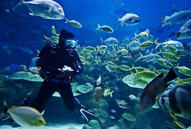Egyptyske autoriteiten ferbiede toeristen fisk te foerjen by dûktochten