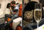 """کرملین: هیچ نظری در مورد حادثه """"گربه چاق"""" Aeroflot وجود ندارد"""