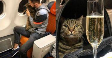 Kreml: Ingen kommentar til Aeroflot 'fat cat' hændelse