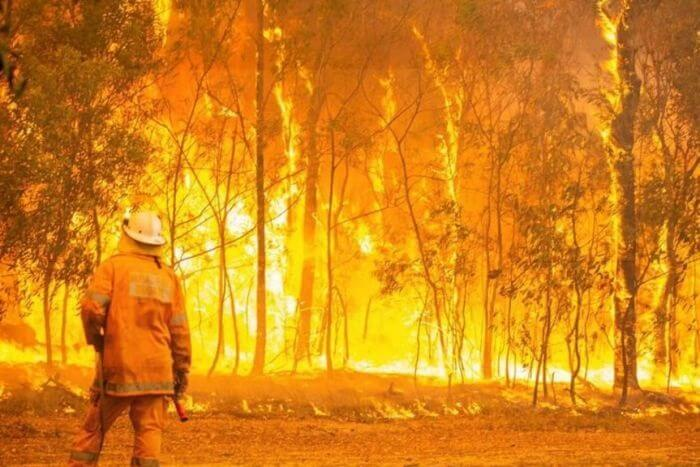 At least 7 dead, over 100 houses and koala habitat destroyed in Australia wildfires