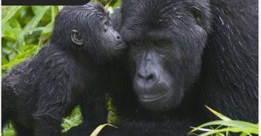 تورهای سفارشی اتصال بازدید کنندگان و افراد محلی در آفریقای شرقی
