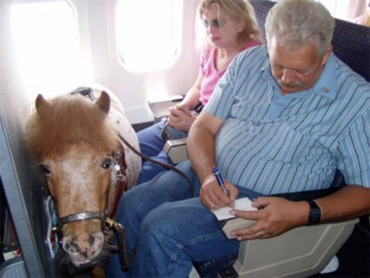 Разкрито е отношението на потребителите към служебните животни по време на пътуване
