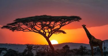 Η Γερμανία επεκτείνει την οικονομική υποστήριξη για τη διατήρηση της άγριας πανίδας στην Τανζανία