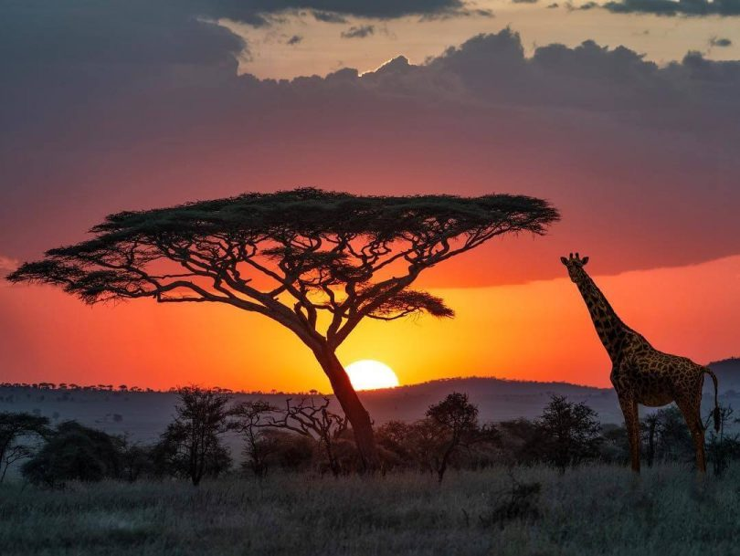 Germany extends financial support for wildlife conservation in Tanzania