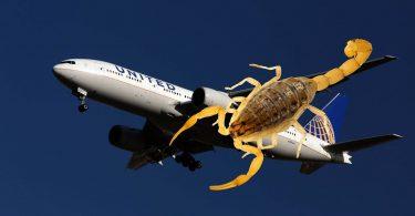 Scorpion hyökkää United Airlinesin matkustajaan San Francisco-Atlanta-lennolla