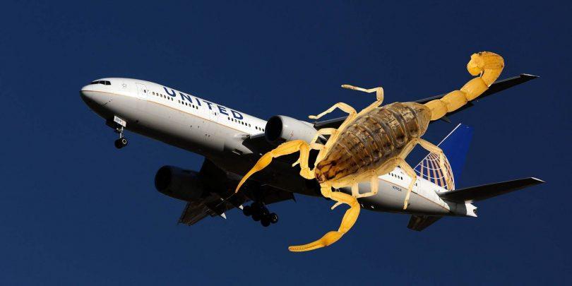 Scorpion attaque un passager d'United Airlines sur un vol San Francisco-Atlanta