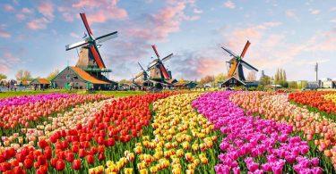 در هلند دیگر لاله ، آسیاب بادی و گاو وجود ندارد؟