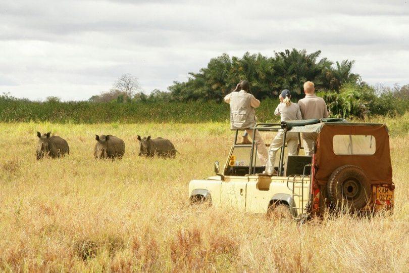 El parque nacional más grande de África Oriental en Tanzania