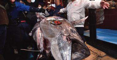 Ny 'Tuna King' any Japon dia mitentina 1.8 tapitrisa dolara amin'ireo trondro tuna ONE