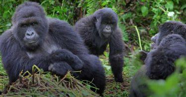 Průvodce Gorilla Trekking v Africe