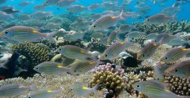 Vanilla Island Tourism starter 2020 med udfordringer