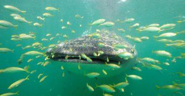 SEZÓNA VELIKONOČNÍHO Žraloka JEDNOU Z NEJLEPŠÍCH VEČERŮ NA OSTROVU MAFIE, TANZÁNII