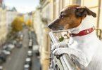 تم تصنيف معظم وأقل أماكن العطلات الصديقة للحيوانات الأليفة في الولايات المتحدة