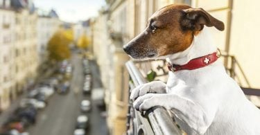 Most and least pet-friendly vacation spots in US ranked