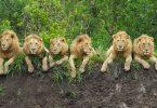 """المنشأة حديثًا """"سيرينجيتي في جنوب تنزانيا"""""""