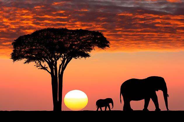Zinthu 5 Zomwe Muyenera Kuzilingalira Musanapite kuulendo waku Africa