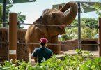 Honolulu Zoo achieves esteemed AZA accreditation