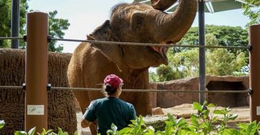 Honolulu Zoo opnår værdsat AZA-akkreditering