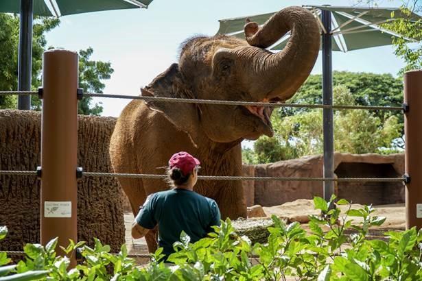 Honolulu Zoo achieves esteemed Association of Zoos & Aquariums accreditation
