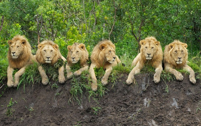 تأثیر Covid-19 در حفاظت از حیات وحش در آفریقا