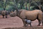 Mkomazi Wildlife Park turns into rhino tourism sanctuary