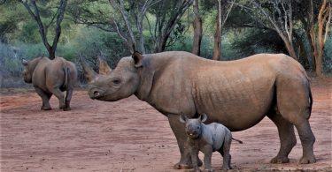 Le parc animalier de Mkomazi se transforme en sanctuaire touristique des rhinocéros