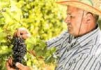 Wine from Kosovo – Not Costco