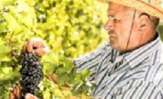 شراب از کوزوو - نه Costco
