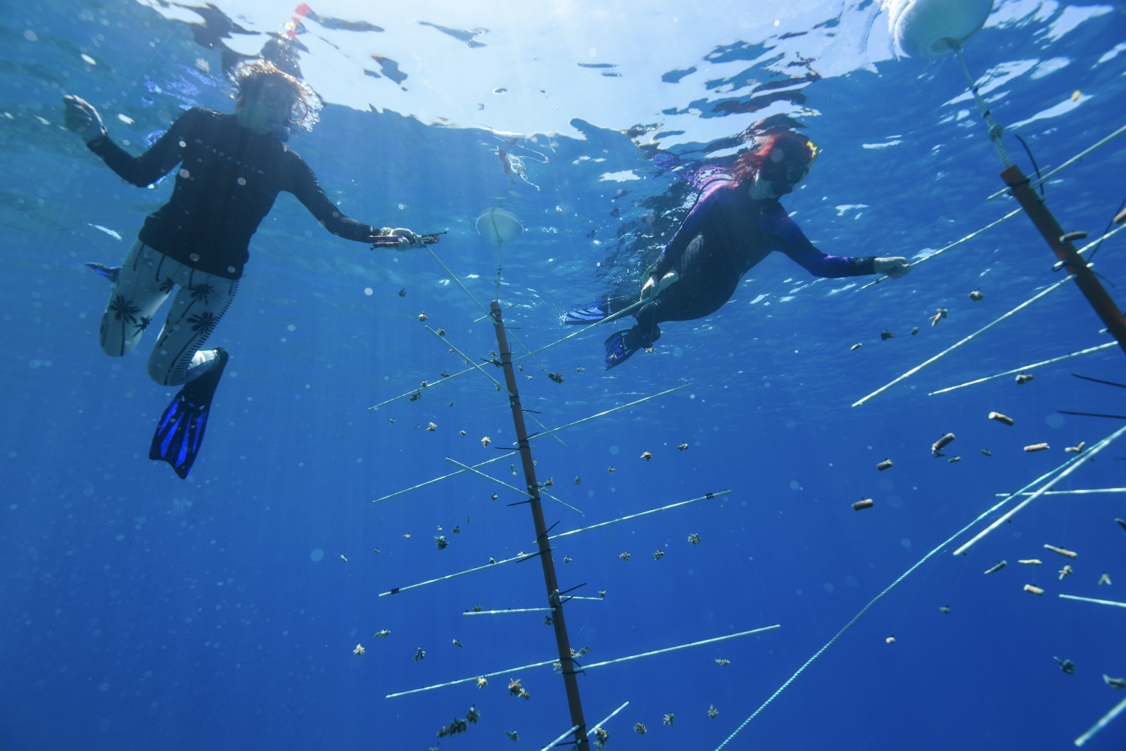 Protecting marine tourism: Divers at work on Great Barrier Reef coral nursery