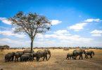 African Wildlife Foundation Champions Biolofical Diversity Conservation