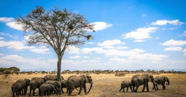 Afrikan luonnonvaraisten säätiön mestareita biologisen monimuotoisuuden suojelussa