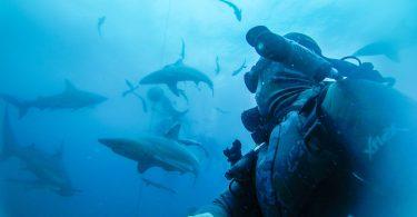 به اقیانوس ها صدا دهید