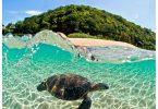 ハワイへの観光の再開はオーストラリアとニュージーランドから始まるかもしれません