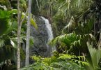 Vallée de Mai reopens on Seychelles