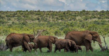 Afrikan osavaltiot, jotka taistelevat COVID-19: n kanssa pienillä villieläinten suojelubudjeteilla